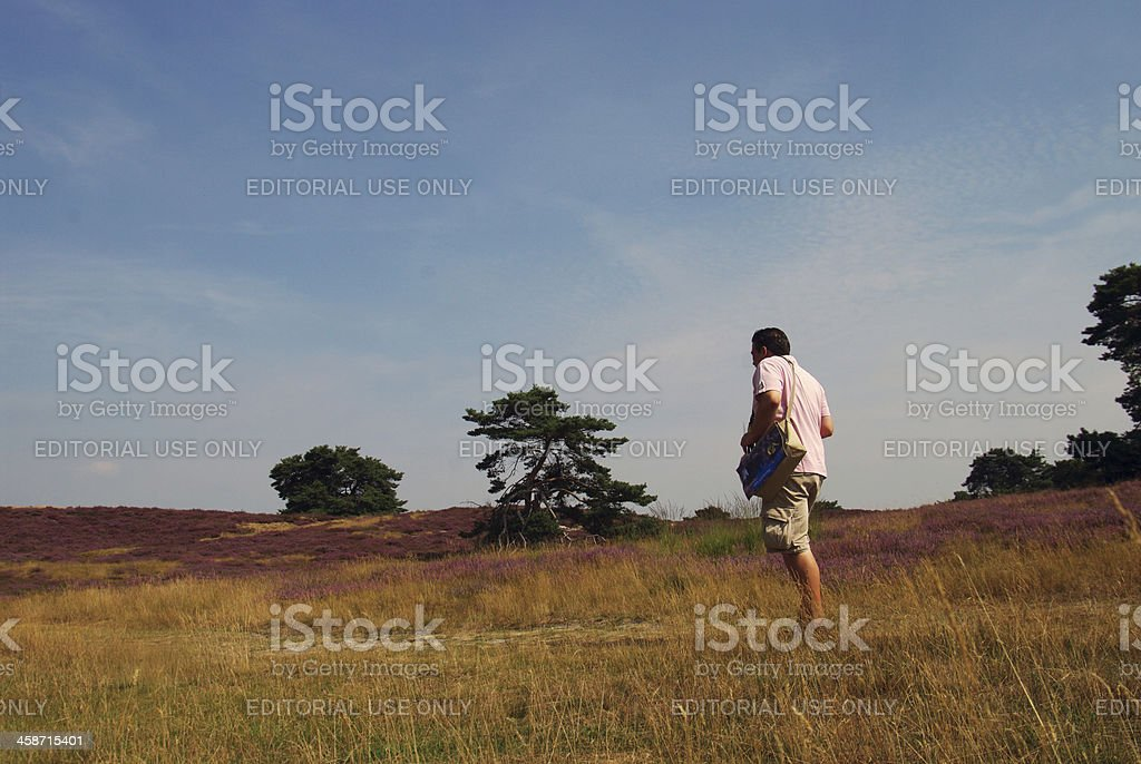 Purple heathland on a summer day royalty-free stock photo