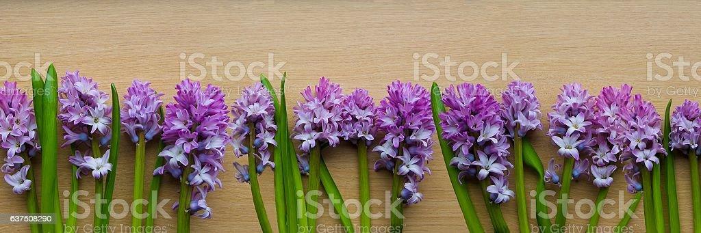 Purple Hyacinth banner stock photo