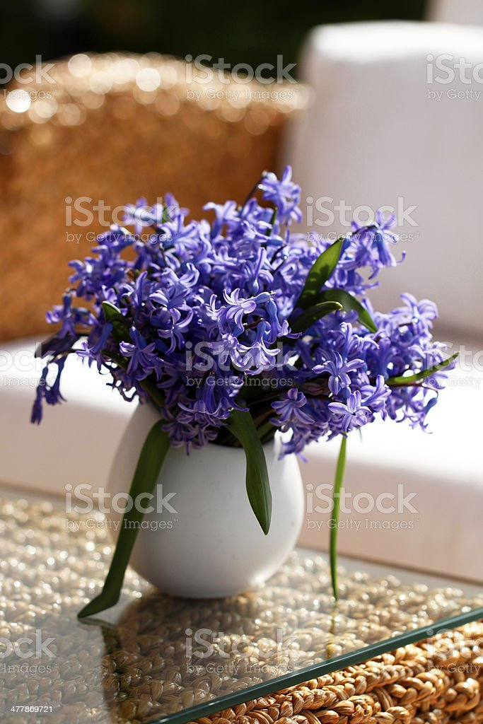 Purple Hyacinth stock photo
