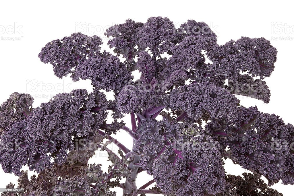 Purple kale stock photo