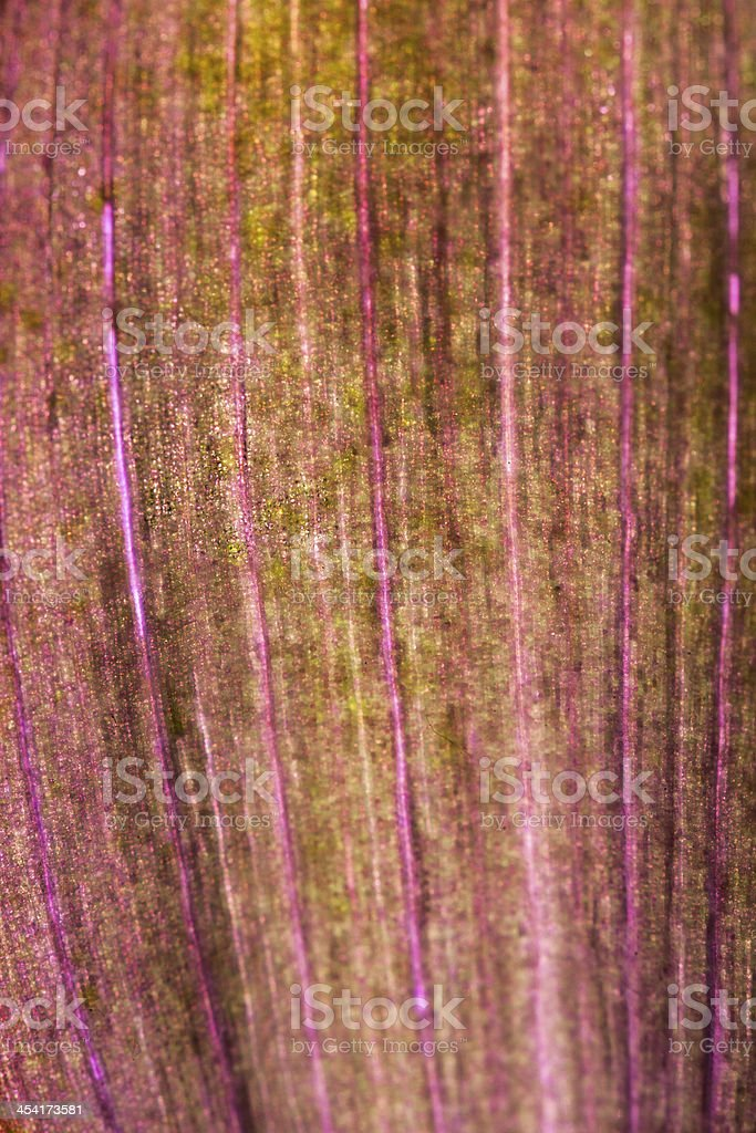 Purple leaf pattern royalty-free stock photo