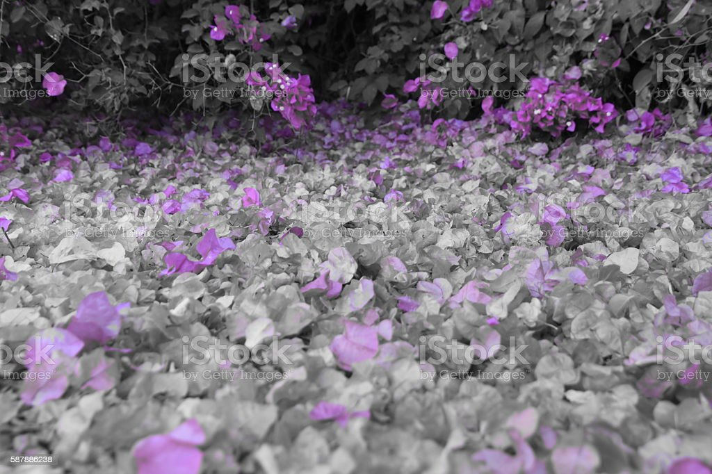 Purple leaves background stock photo
