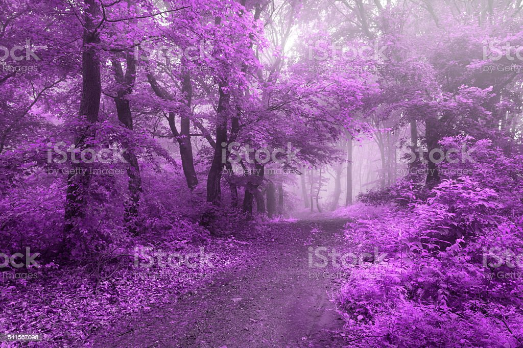 Purple leaves in fairy tale forest stock photo
