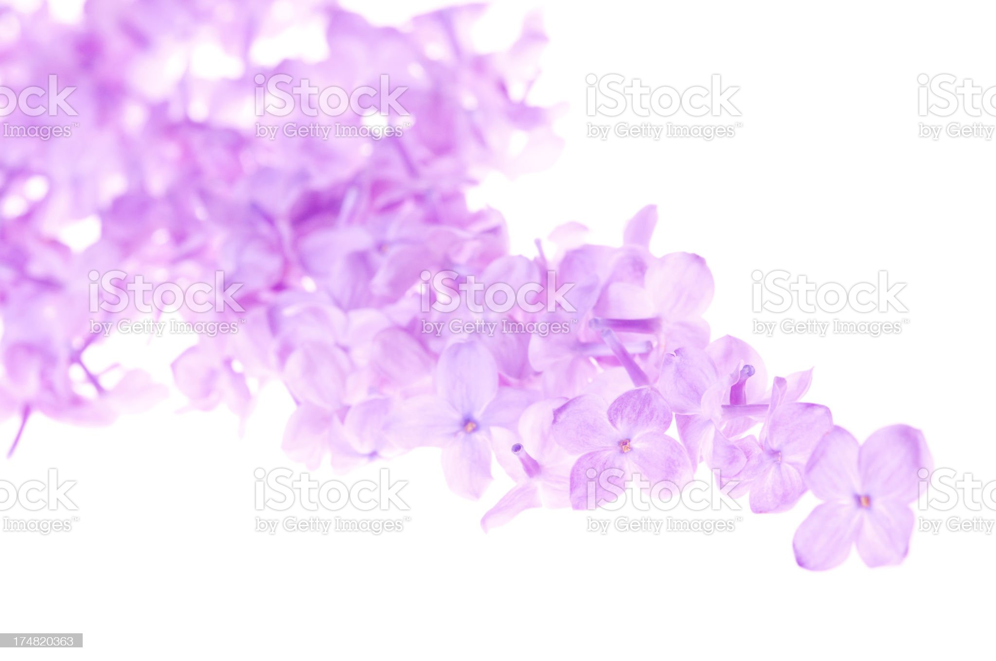 Purple lilac petals background. royalty-free stock photo