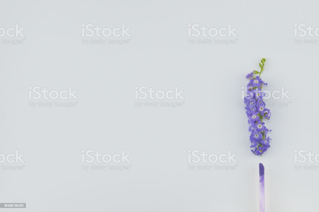 Purple lip gloss and purple flowers of Duranta erecta L. stock photo