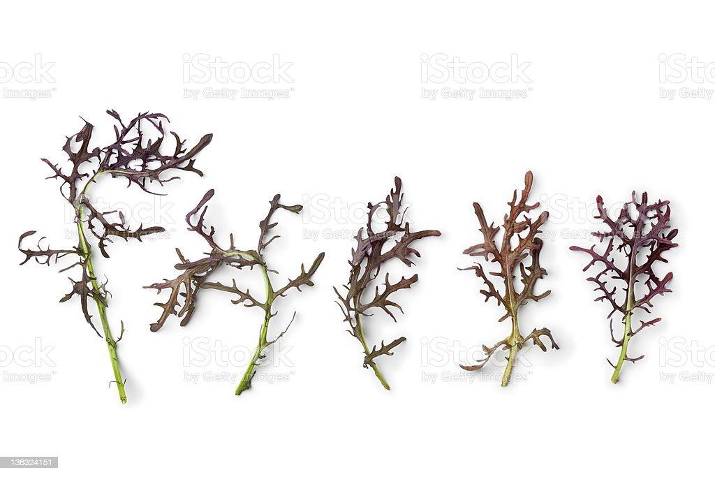 Purple Mizuna leaves stock photo