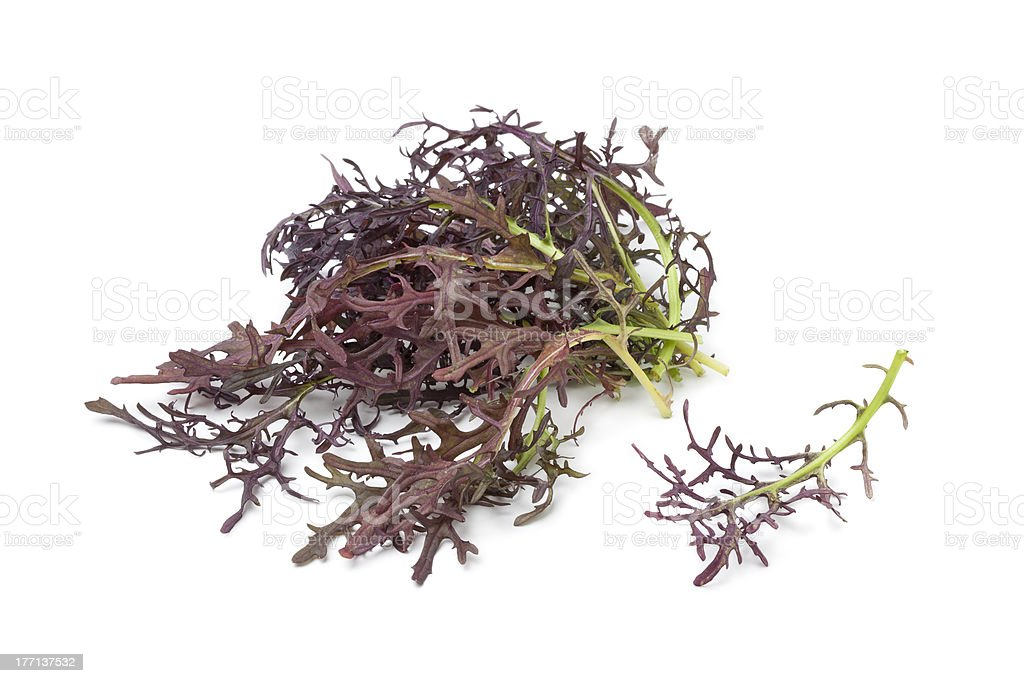 Purple Mizuna stock photo