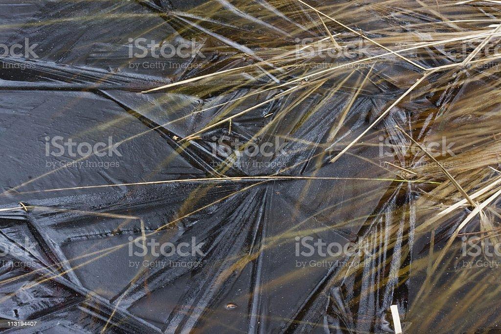 Purple Moor Grass under thin ice stock photo