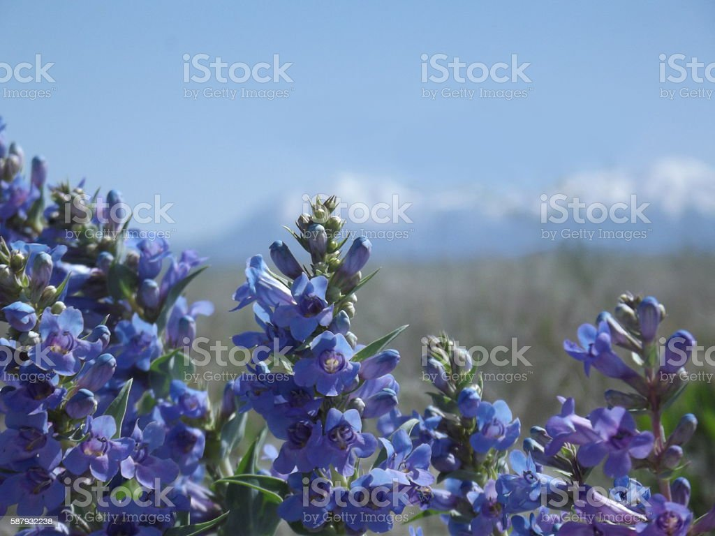 Purple Mountain Morning stock photo