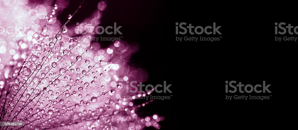Purple nature banner stock photo