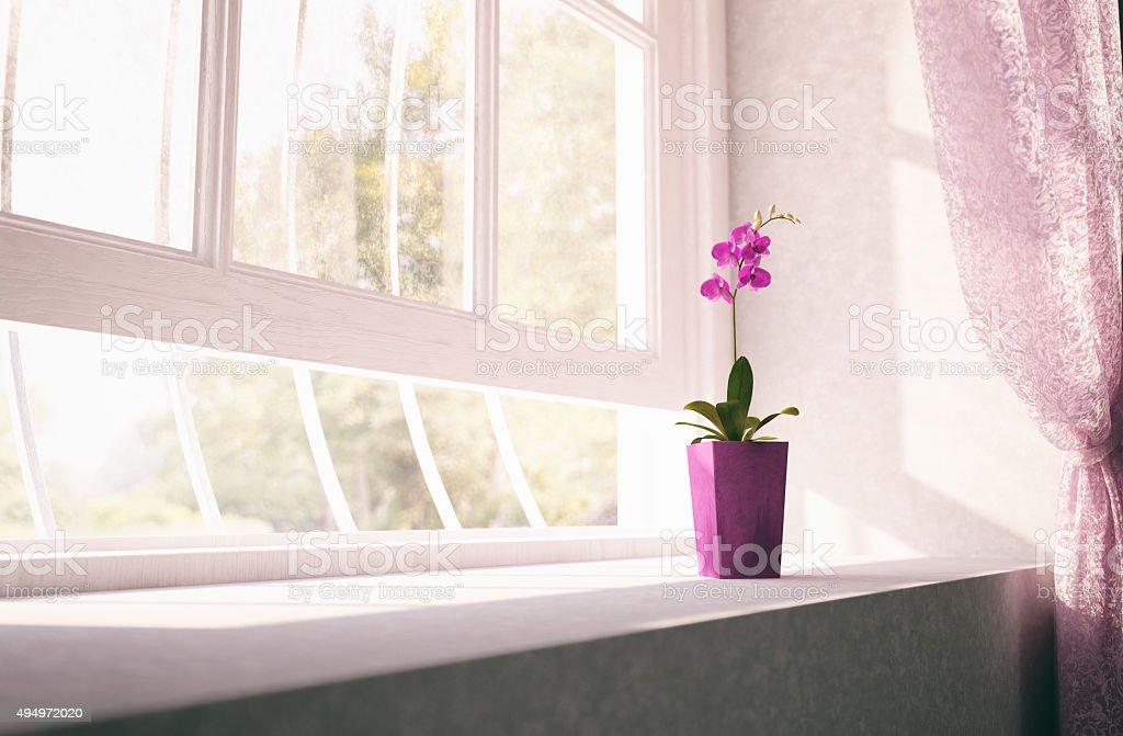 Purple orchid flower on window sill