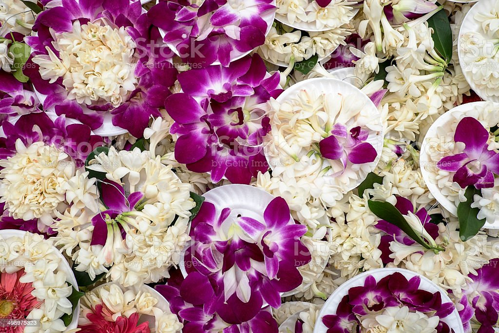 Purple Orchid Offerings stock photo