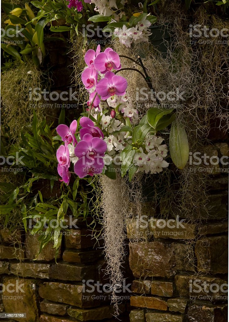 Purple Orchids and Spanish Moss royalty-free stock photo