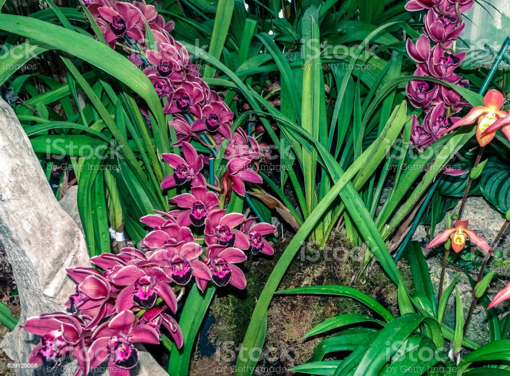Purple orchids and tropical grasses stock photo