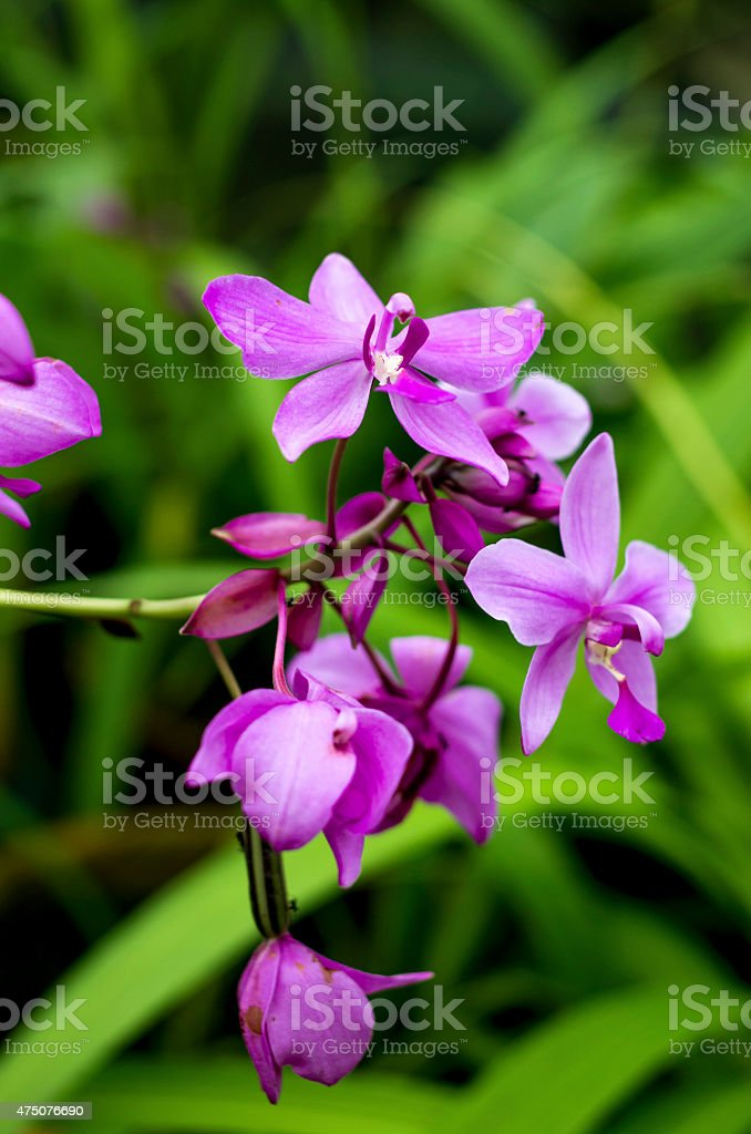 Purple orchids on branch stock photo