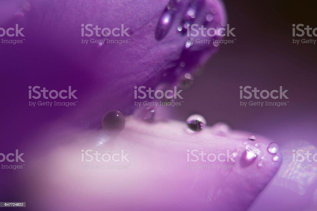 Purple People Eater stock photo