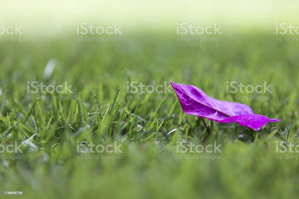 Purple Petal royalty-free stock photo