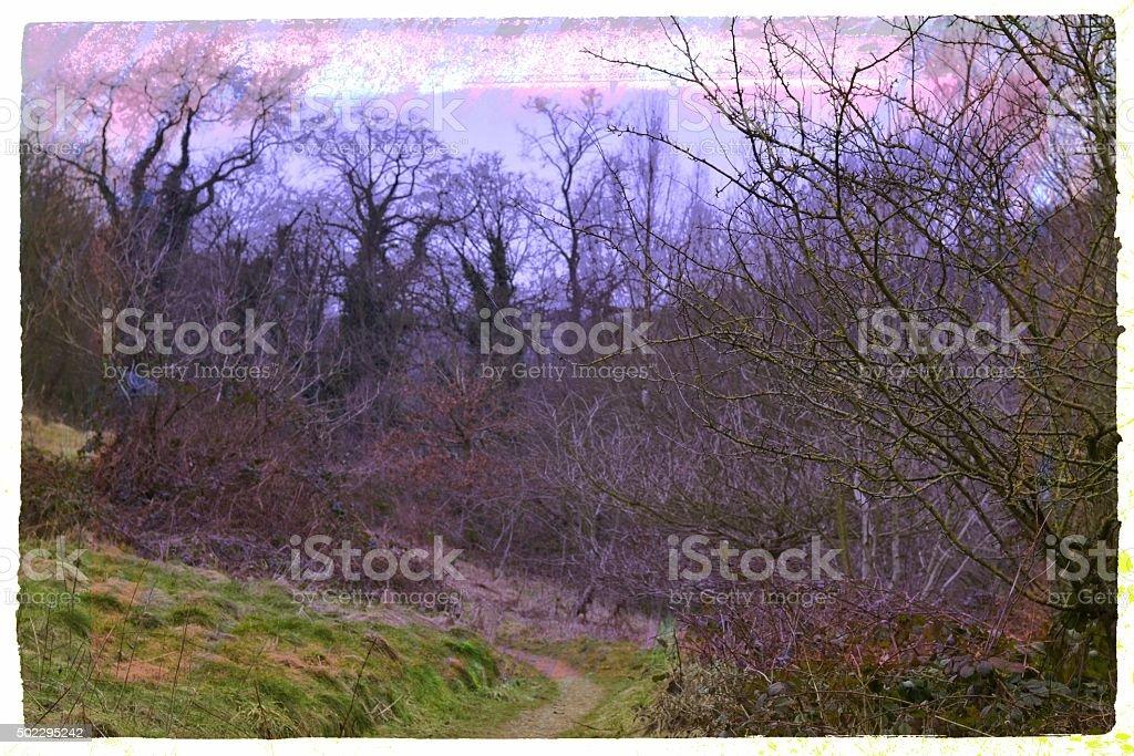 Purple Sky stock photo