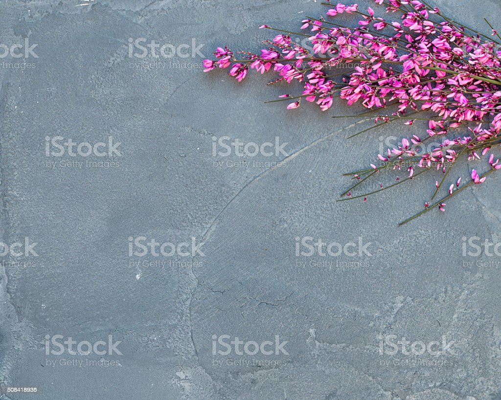 Purple spring blooming tree branch on a grey concrete stone stock photo