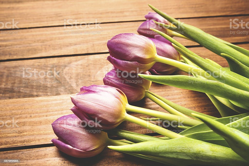 purple spring tulip with copyspace royalty-free stock photo