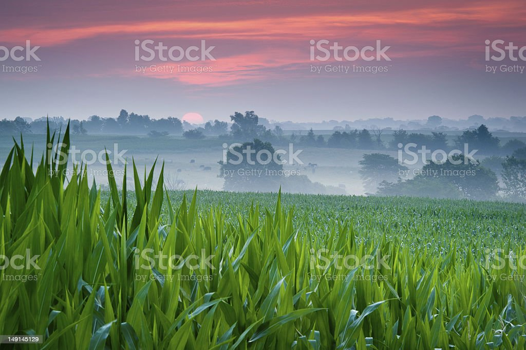 Purple Sunrise in Country stock photo