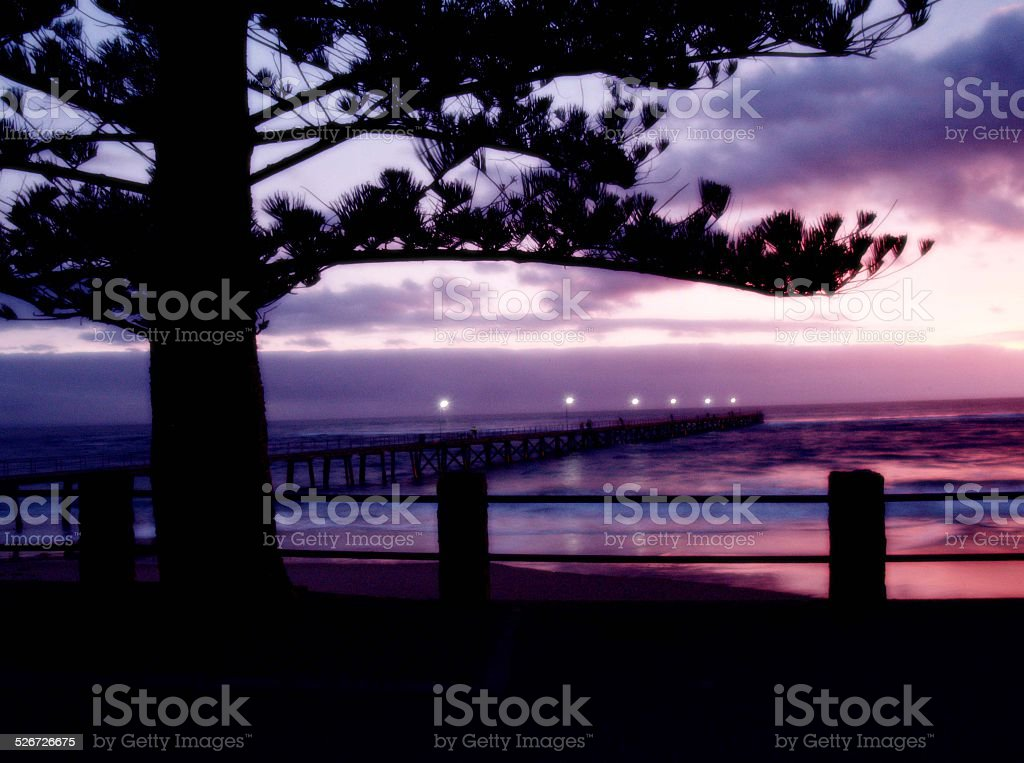 Purple Sunset at beach with pine tree branch silhouette royalty-free stock photo