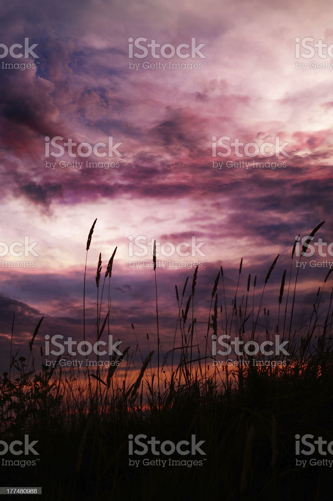 Purple Sunset : Gone with the Wind sky royalty-free stock photo