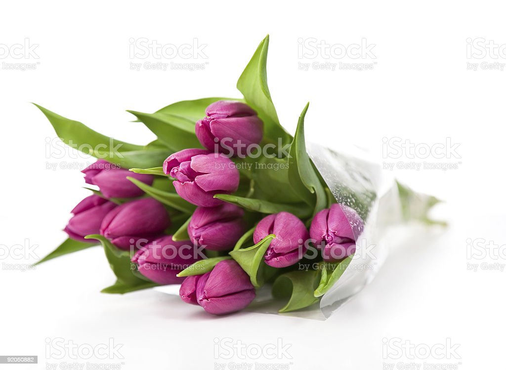 Purple tulips on a white background royalty-free stock photo