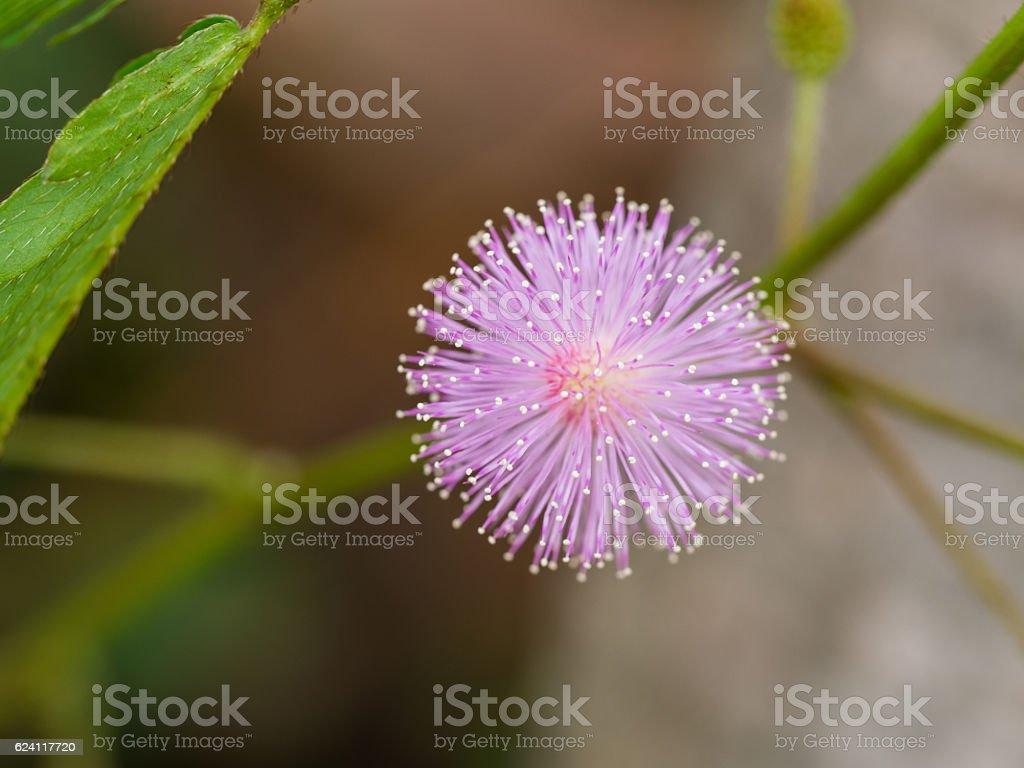 Purple Unwanted Flora Flower stock photo