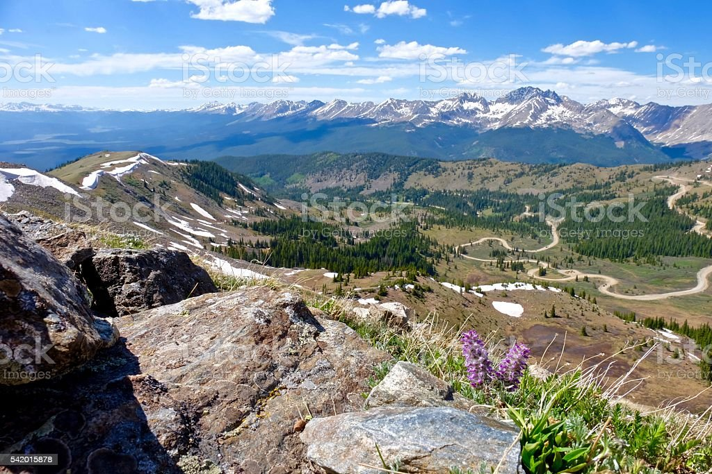 Purple wild flowers in mountains with panoramic view. stock photo