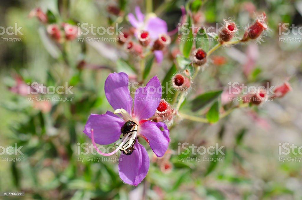 Purple wildflowers Born on stream in the forest beautiful detai stock photo