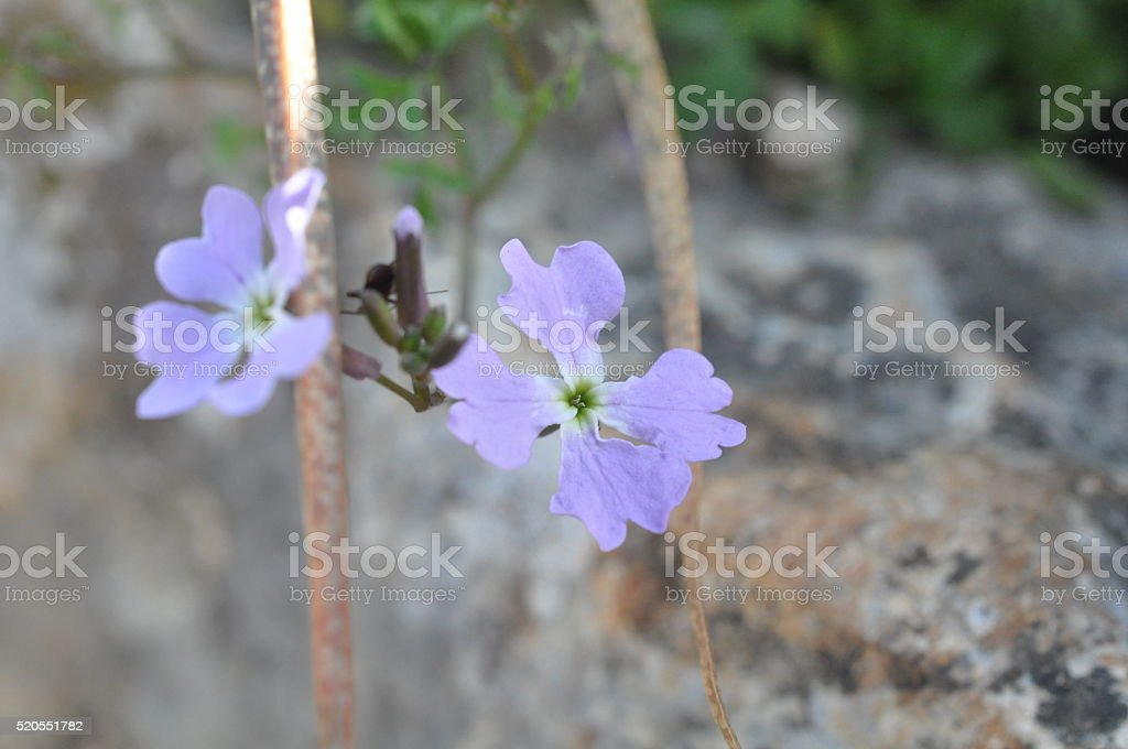 Purple Wildflowers in the Shade stock photo