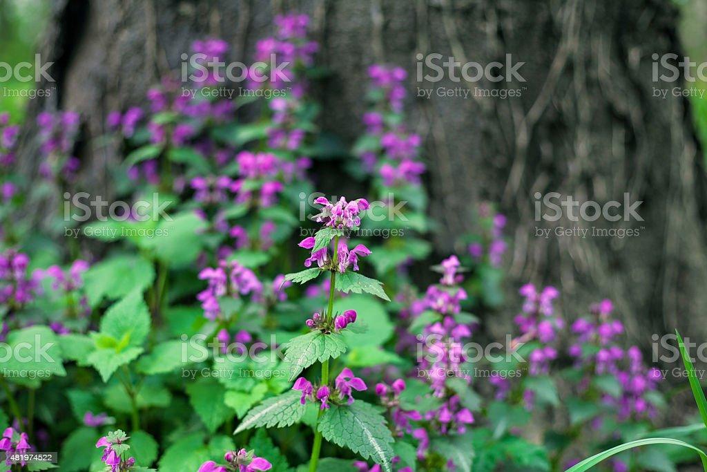 Purple wildflowers royalty-free stock photo