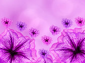 purple-pink  flowers,  on pink- blurred background .  Closeup.