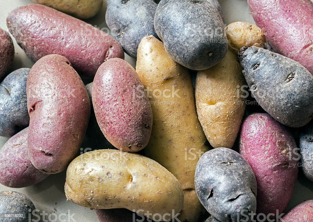 Purple,red and brown potatoes stock photo