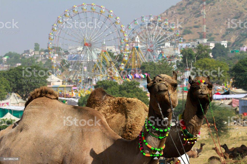 Pushkar Camel Fair -India stock photo