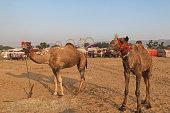 Pushkar Camel Fair, Rajasthan, India.