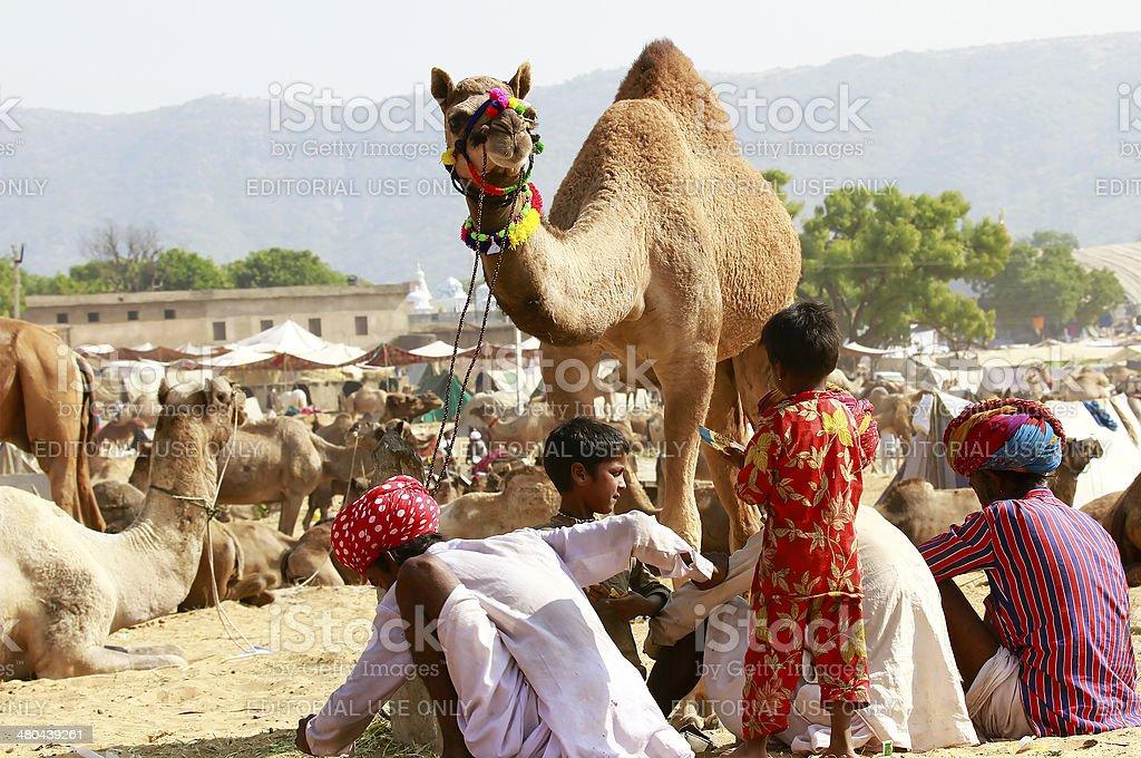 Pushkar Fair royalty-free stock photo