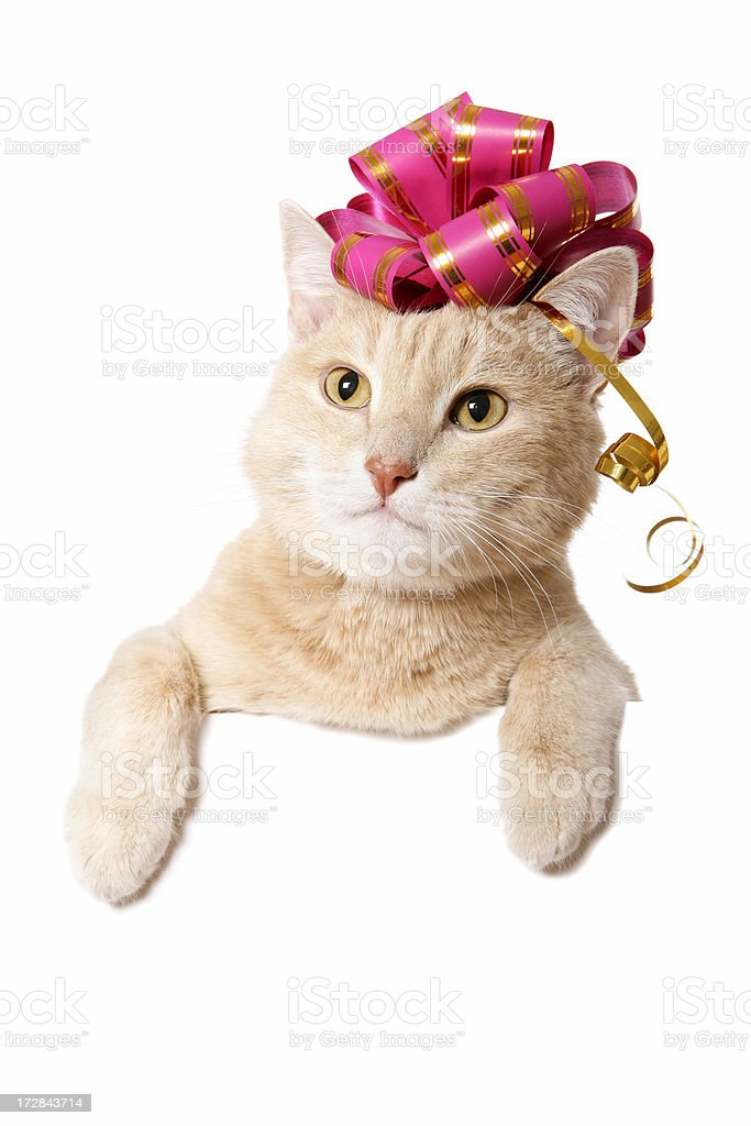 Pussy Gift (Blank Sign on white) royalty-free stock photo