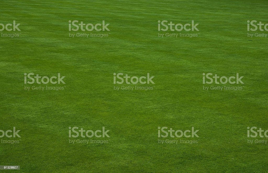 Putting green grass royalty-free stock photo