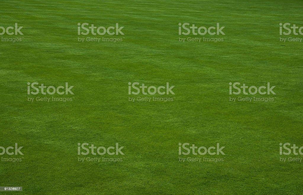 Putting green grass stock photo