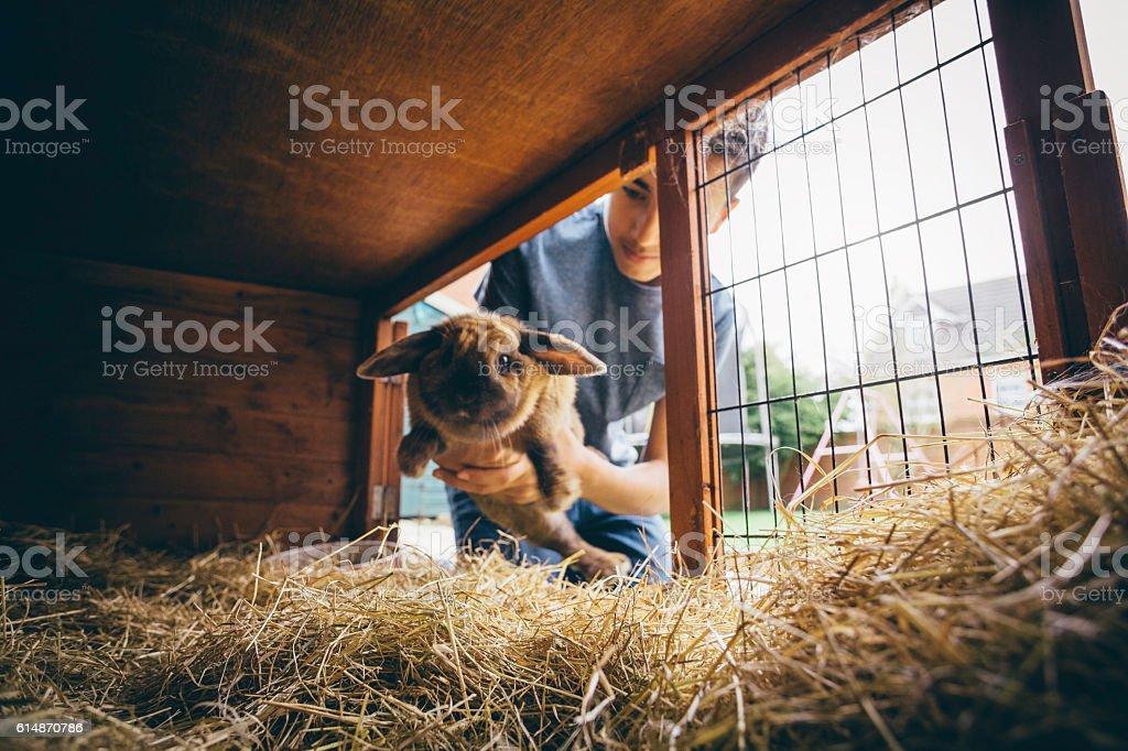Putting the Rabbit Back stock photo
