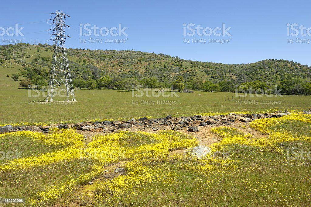 Pylons, Power Lines and Wildflowers royalty-free stock photo