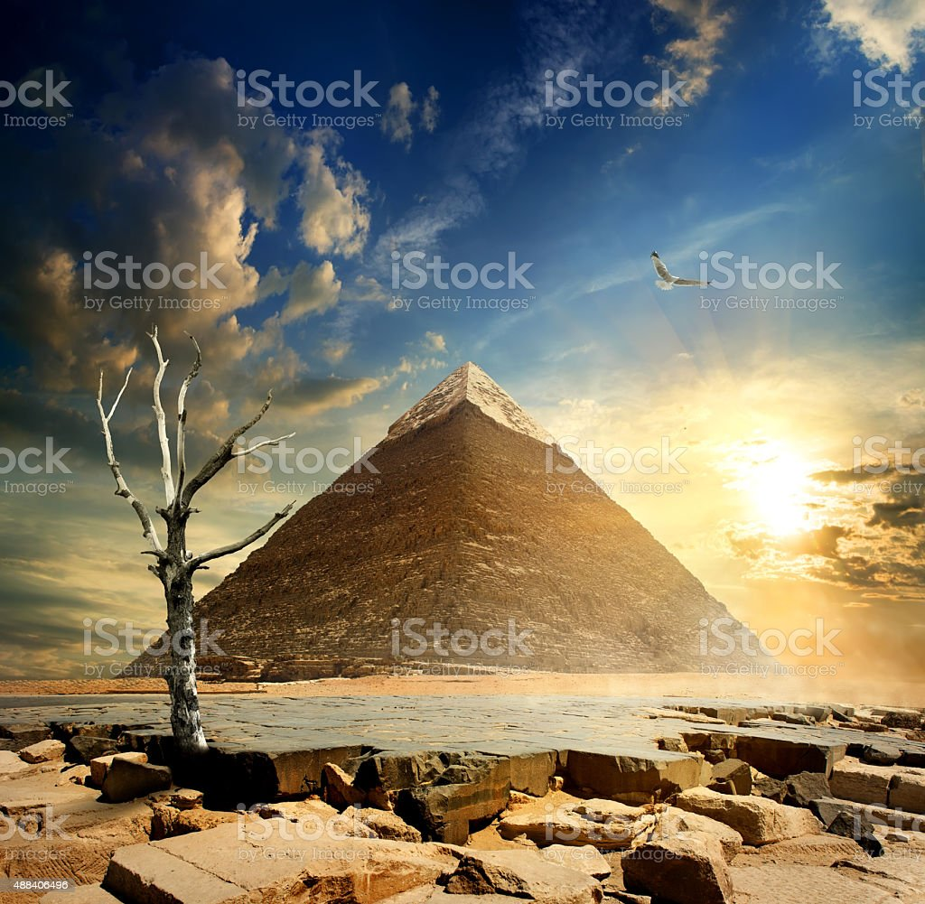 Pyramid and dry tree stock photo