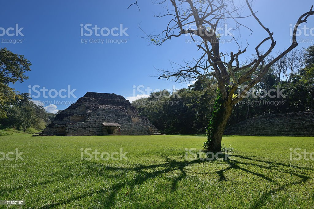 Pyramid and withered old tree in El Puente Archaeological Park royalty-free stock photo