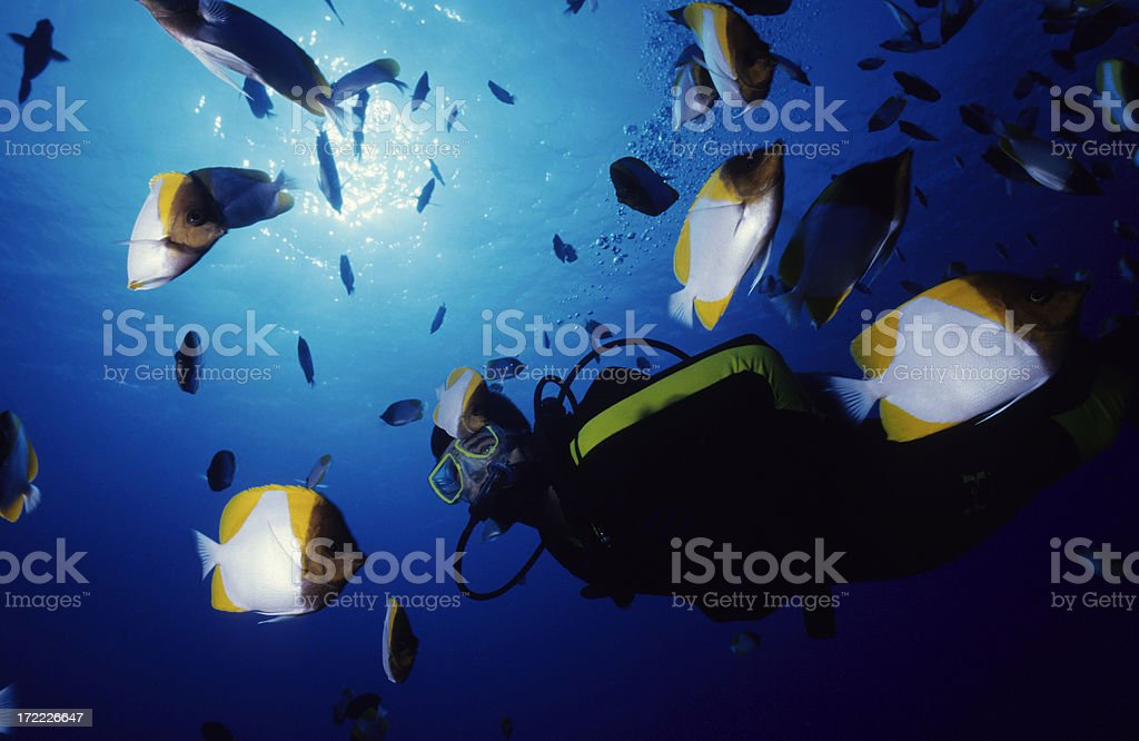 Pyramid Butterflyfish and Diver royalty-free stock photo