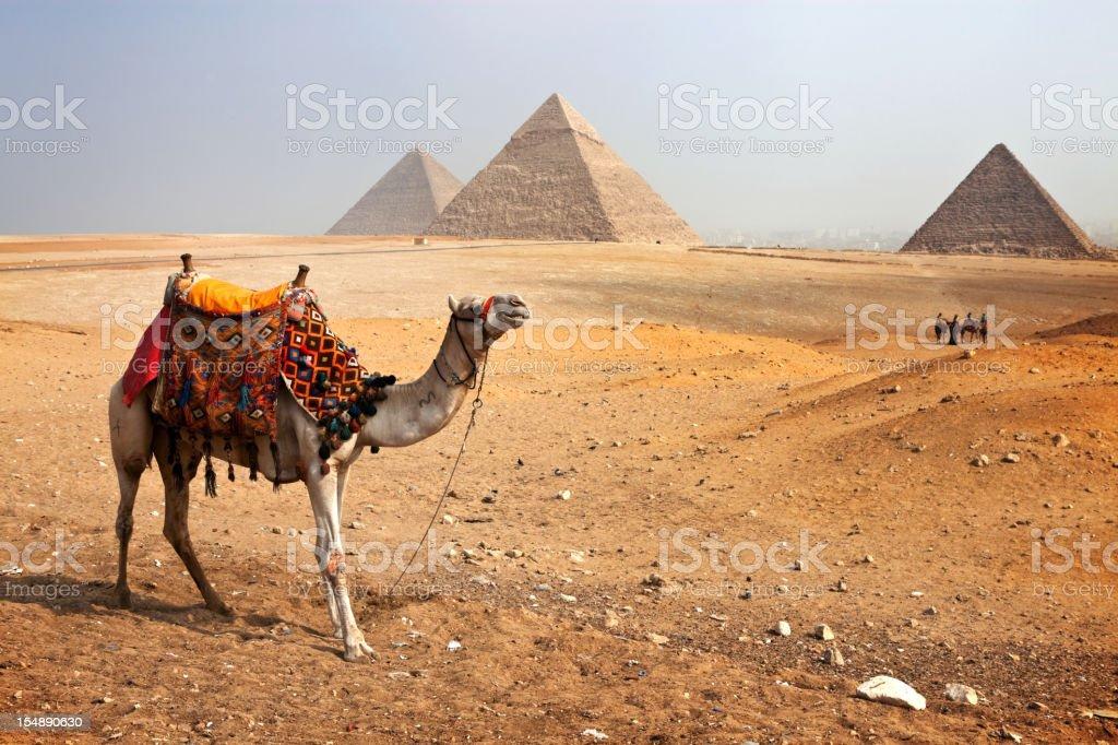 Pyramids and Camel royalty-free stock photo