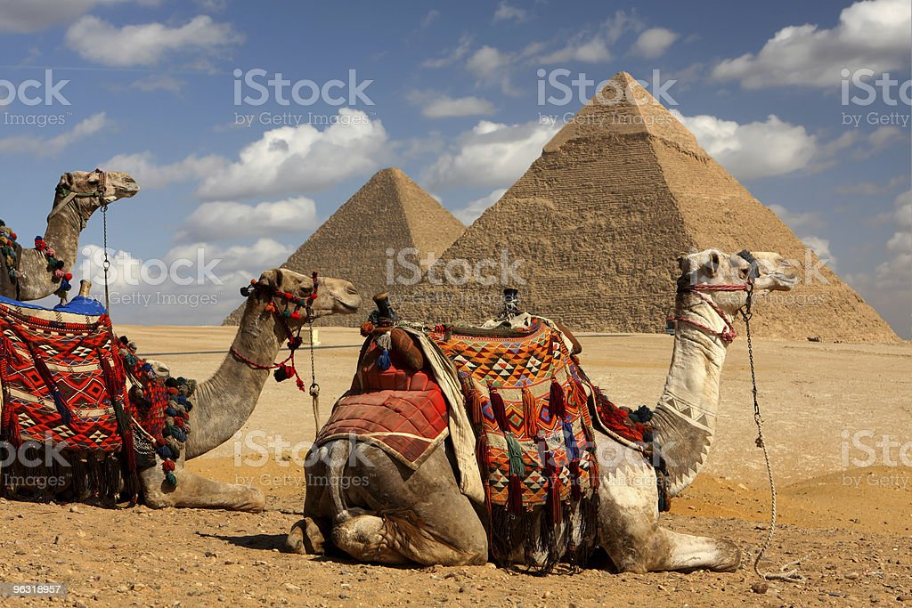 pyramids and camels stock photo