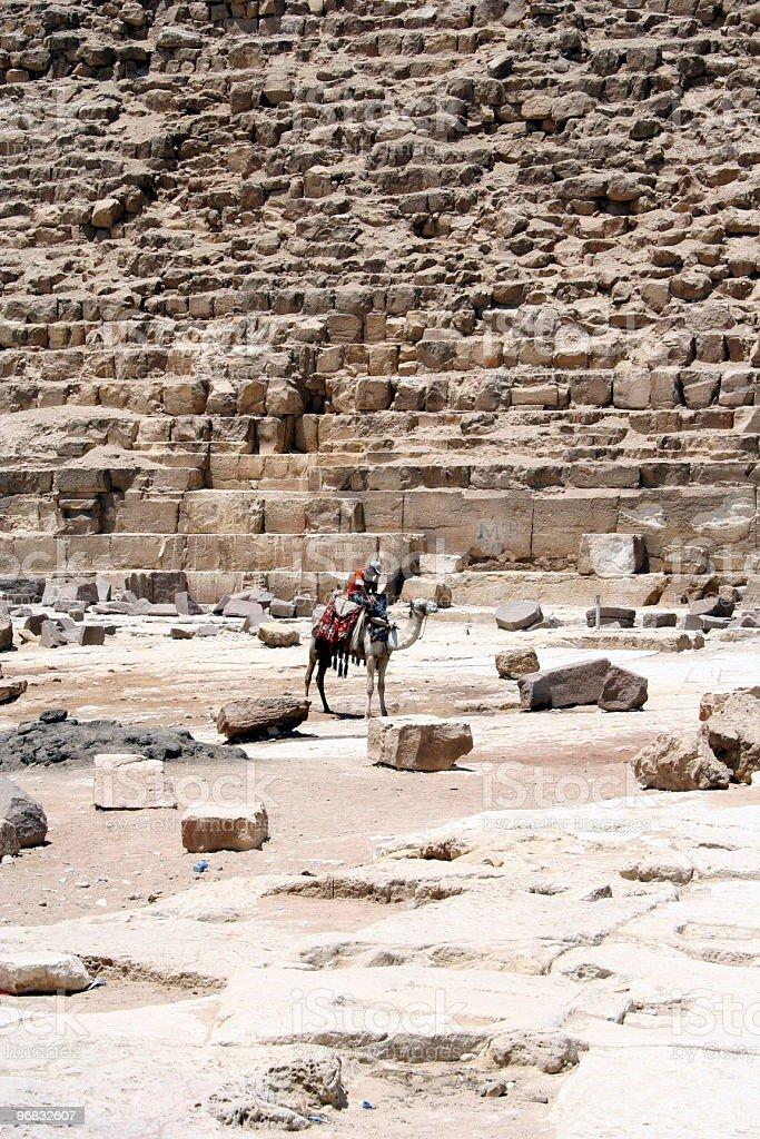 pyramids & camel royalty-free stock photo