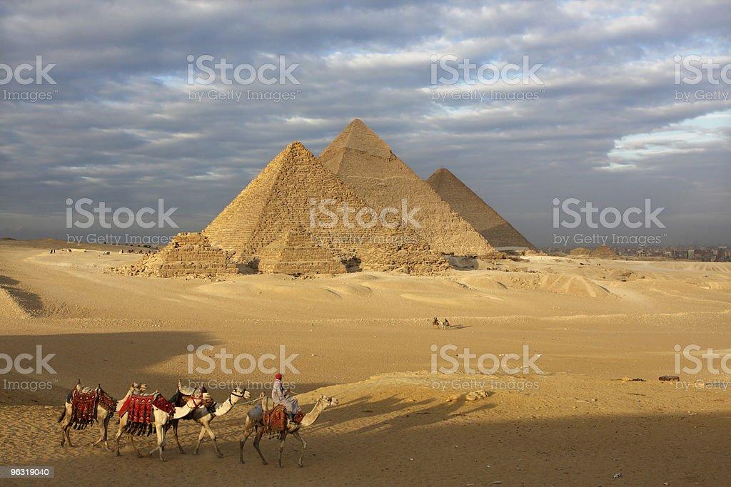 pyramids egypt camels royalty-free stock photo
